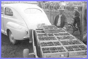 Grandfather Peter Wiensz Shipping StrawBerries