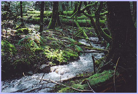 Mountain Stream, Vedder Mountain
